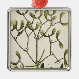 """Muérdago """"de un herbario curioso"""", 1782 ornaments para arbol de navidad"""