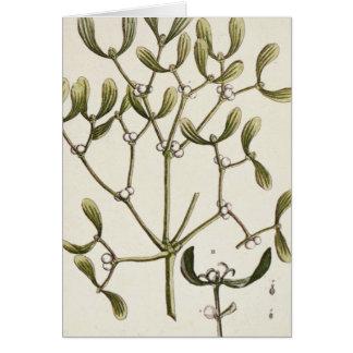 """Muérdago """"de un herbario curioso"""", 1782 tarjeta de felicitación"""