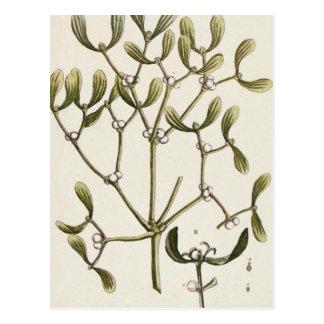 """Muérdago """"de un herbario curioso"""", 1782 tarjetas postales"""