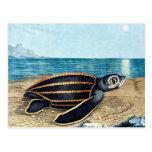 Muere Seeschildkröte o la tortuga de mar (1867) Postal