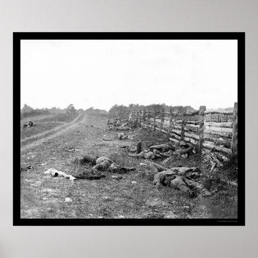 Muertes confederadas en Antietam 1862 Posters