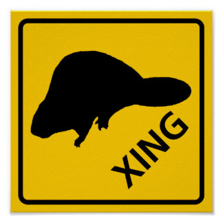 Muestra de la carretera de la travesía del castor póster