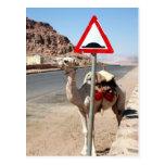 muestra de la chepa de la velocidad del camello postal