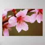muestra de la impresión de la primavera impresiones