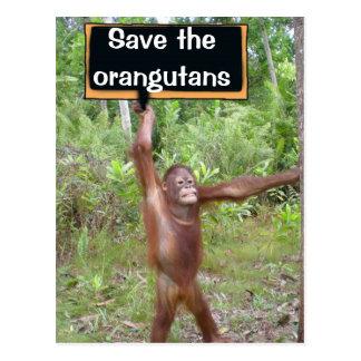 Muestra de la protesta del orangután tarjeta postal