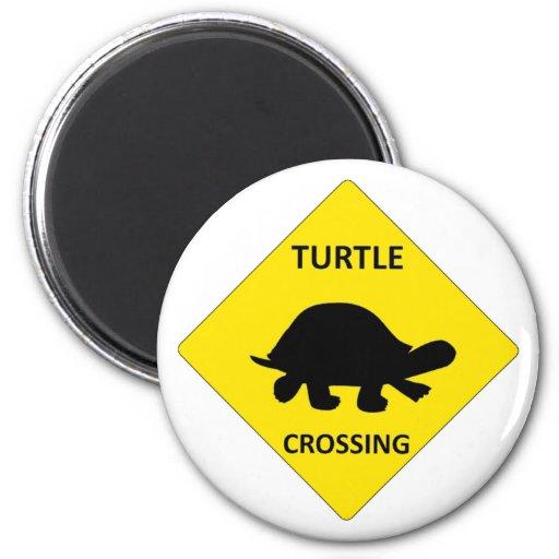 Muestra de la travesía de la tortuga imán para frigorifico