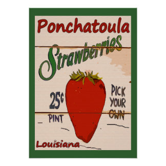 Muestra de las fresas de Ponchatoula Póster