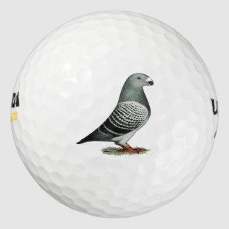 Muestre a corredor la paloma azul del inspector pack de pelotas de golf