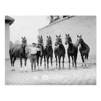 Muestre a Horses, 1912 Tarjetas Postales