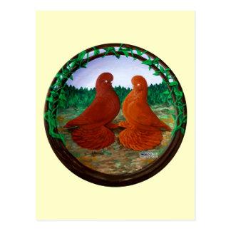 Muffed Tumbler Pigeons2 Postcard