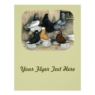 Muffed Tumbler Pigeons Flyer