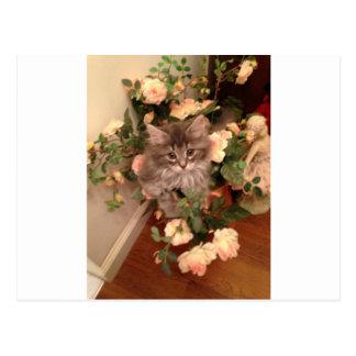 Muffen Kitten Postcard