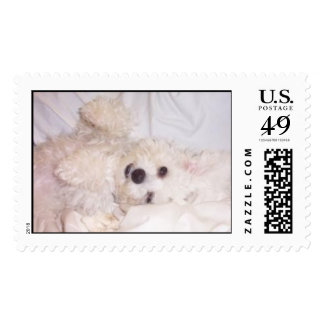 Muffie on Bed Postage