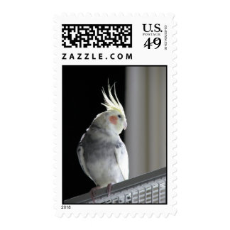 Muffin the Cockatiel Stamp