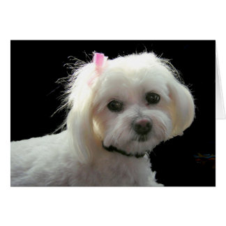 Muffy's pink bow greeting card
