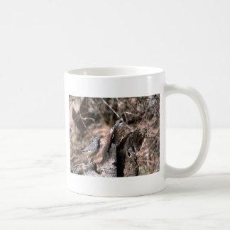 Mug / Cactus Wren