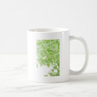 Mug Green Oasis