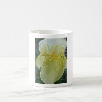 Mug-White and lemon yellow iris flowerafter a rain