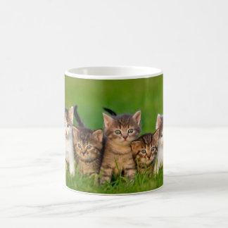 mug white kittens