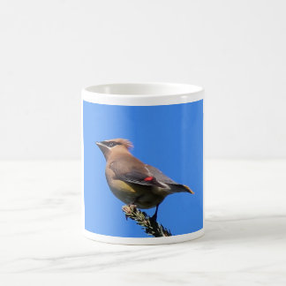 Mug with Cedar Waxwing!