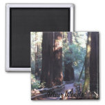 Muir Woods 2 Inch Square Magnet