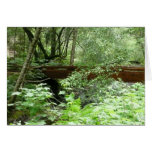 Muir Woods Bridge I Card