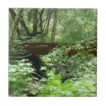 Muir Woods Bridge I Ceramic Tile