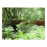 Muir Woods Bridge I Photo Print