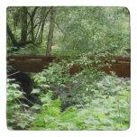 Muir Woods Bridge I Trivet
