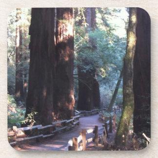 Muir Woods Coasters