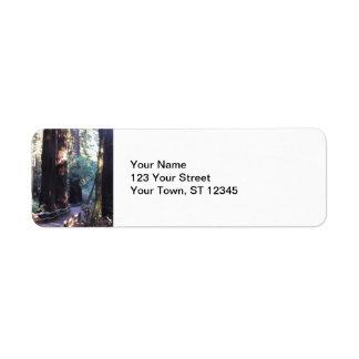 Muir Woods Label