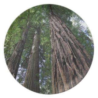 Muir Woods Melamine Plate