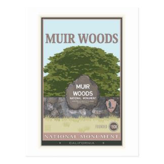 Muir Woods National Monument 2 Postcard