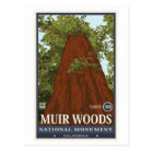 Muir Woods National Monument 3 Postcard
