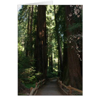 Muir Woods National Monument Greeting Card