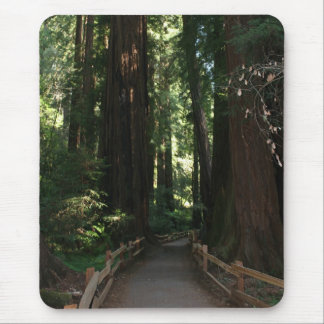 Muir Woods National Monument Mouse Pad