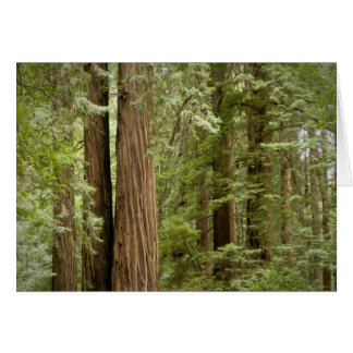 Muir Woods National Monument, Northern Card