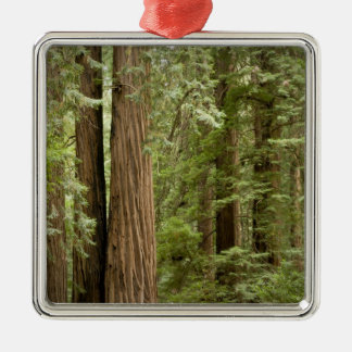 Muir Woods National Monument, Northern Metal Ornament