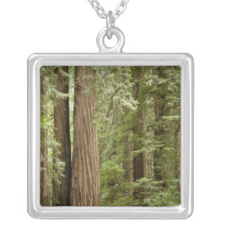 Muir Woods National Monument, Northern Necklaces