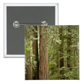 Muir Woods National Monument, Northern Pinback Button