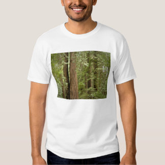 Muir Woods National Monument, Northern Shirt