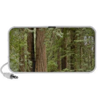 Muir Woods National Monument, Northern Travelling Speaker