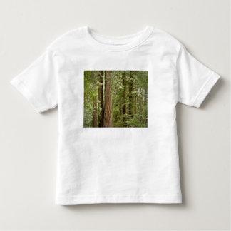 Muir Woods National Monument, Northern Tee Shirt