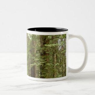 Muir Woods National Monument, Northern Two-Tone Coffee Mug