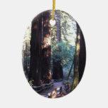 Muir Woods Ornament