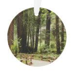Muir Woods Path I and II Ornament