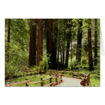 Muir Woods Path I California National Monument Greeting Card