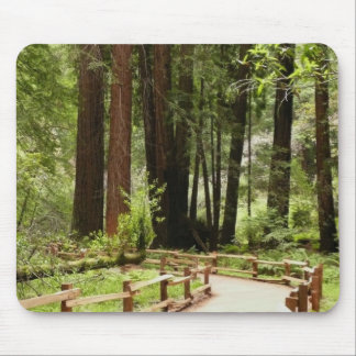 Muir Woods Path I California National Monument Mouse Pad