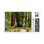 Muir Woods Path I Postage