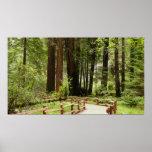 Muir Woods Path I Print